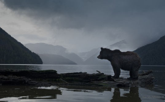 great bear rainforest, b.c. / photo by ian mcallister